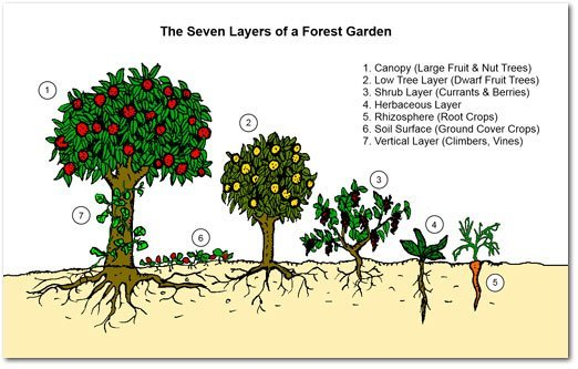 food_forest_layers